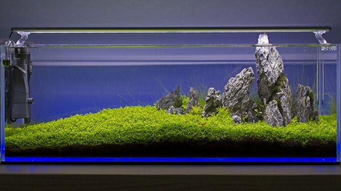 iluminacion acuario plantado