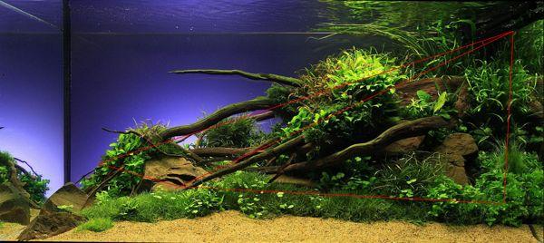 Como decorar una pecera con estilo de triángulo según el aquascaping. Por Acuarema: blog de acuarios plantados.