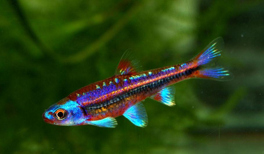 peces de agua fr a tipos y mantenimiento b sico para