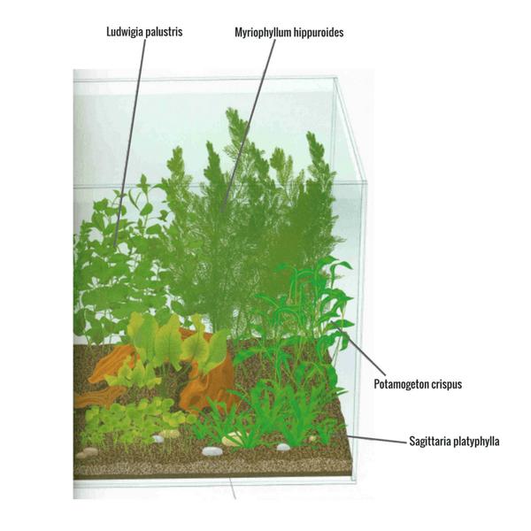 plantas para acuario de agua fr a las 11 imprescindibles