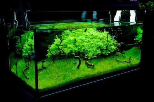 Acuario plantado high-tech