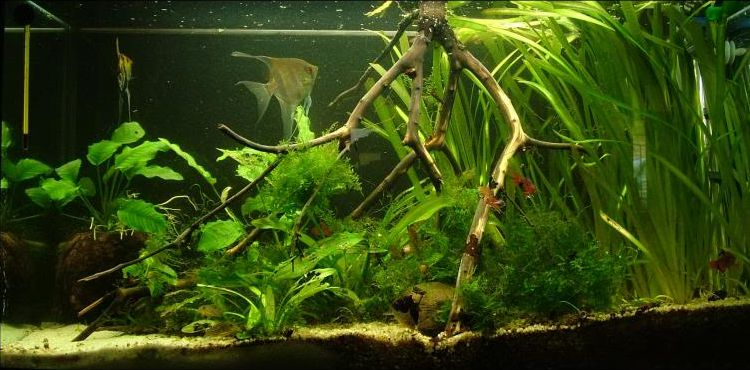 Acuario plantado low-tech sin CO2