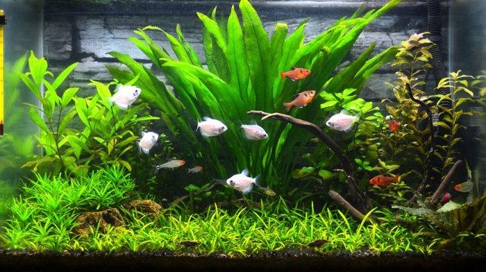 Acuario plantado medium-tech.